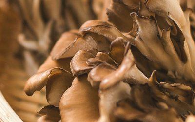 Sick again? Medicinal Mushrooms for the Win…